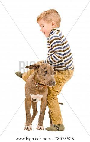 Boy having fun playing with a puppy pitbull