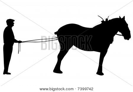 Silhouette of Clydesdale on Long Rein