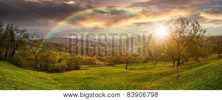 Panorama Of Apple Orchard On Hillside At Sunset