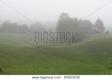 Foggy rural landscape in the morning