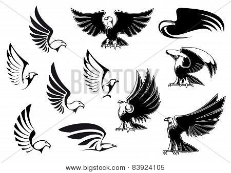 Eagles for logo, tattoo or heraldic design