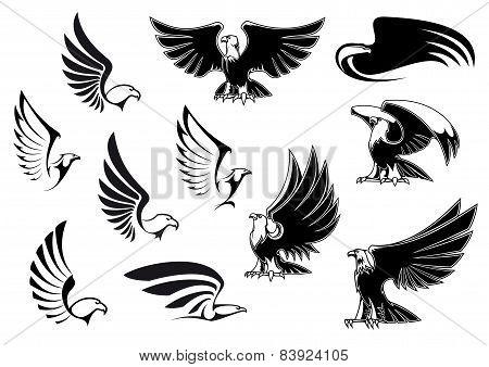 Eagles for logo, tattoo or heraldic design