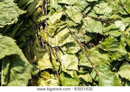 Traditional birch leaves are used in Saunas to help rid the body of toxins poster