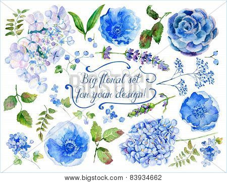 Set Of Different Blue, Cyan Hydrangea, Lavender, Currant For Design.