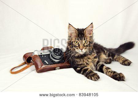 Kitten Camera