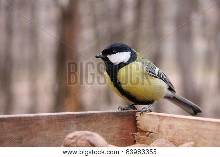 Great Tit In Birdfeeder