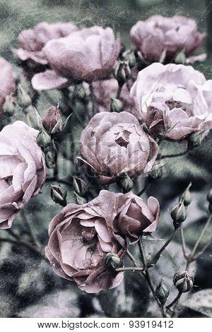 Image of vintage nostalgic roses background texture. poster