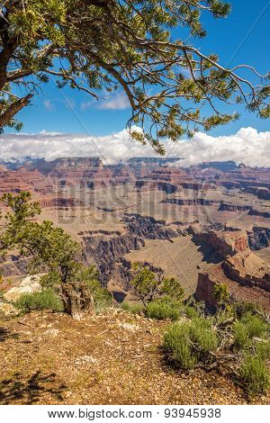 Grand Canyon - View From Mohave Point
