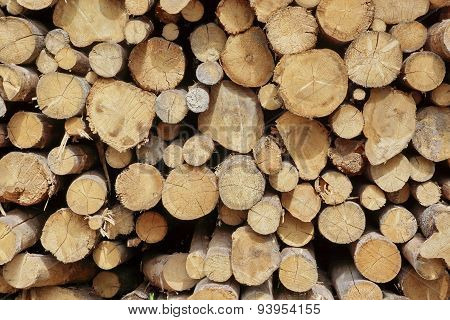 Many Big Pine Wood Logs In Large Woodpile Background Texture
