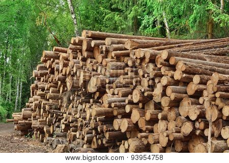 Woodpile From Sawn Pine And  Spruce Logs For Forestry Industry
