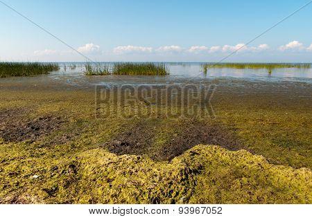 Alga on Gulf of Finland