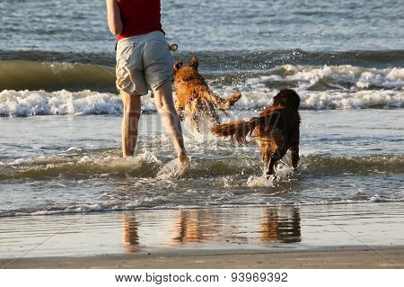 Dogs Play Fetch at the Ocean