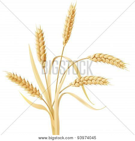 Wheat Ears Tuft