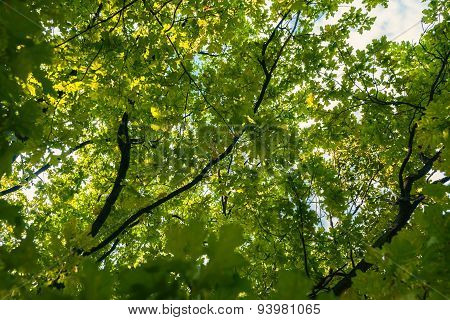 Small Green Leaves At Spring