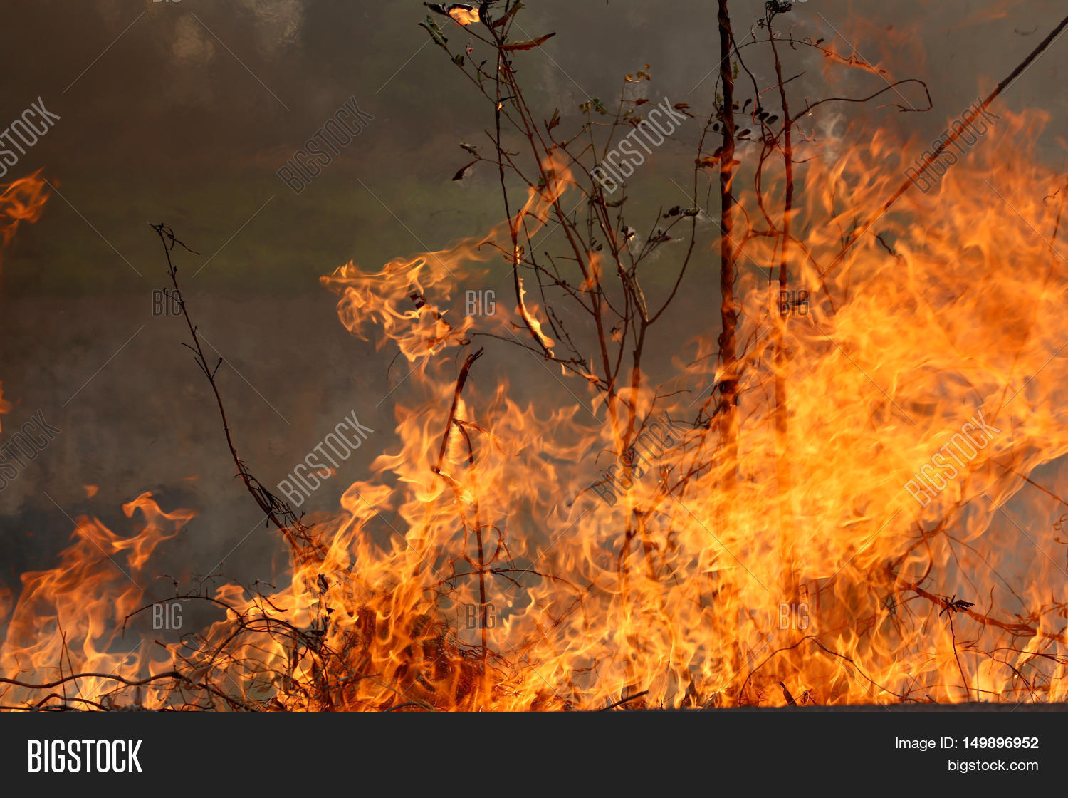 Summer Wildfires Image & Photo (Free Trial) | Bigstock