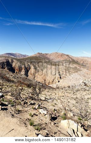 Dry Trees On The Mountain - The Swartberg Pass