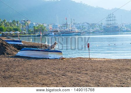 A dog standing on a boat on the beach of Marmaris Turkey