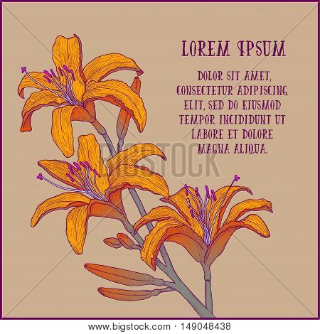 Hand drawn background with colorful tiger lily branch for greeting cards, invitation etc. Vector illustration