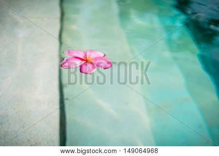 Blossom of Frangipani-Flower floating in pool