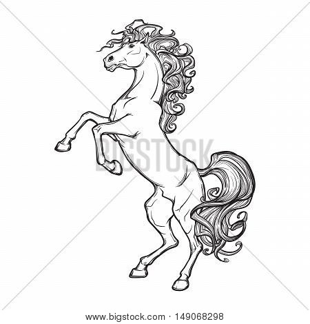 Rearing horse with curly tail and mane. Horse stood up on it's hind legs. Sketch isolated on white background. EPS10 vector illustration.
