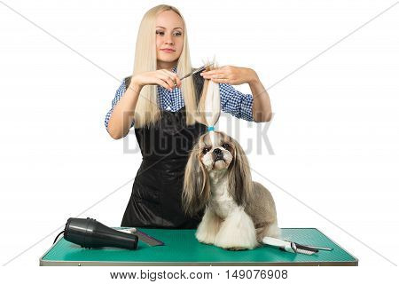 Beautiful smiling woman groomer with scissors and little cute shih-tzu dog - isolated on white