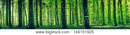 Tree Silhouettes In A Green Forest