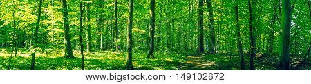 Beautiful Green Forest Scenery In Panorama