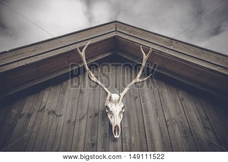 Hunting Trophy Skull Hanging On A Wooden Facade