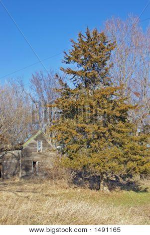 Abondoned Farm Site