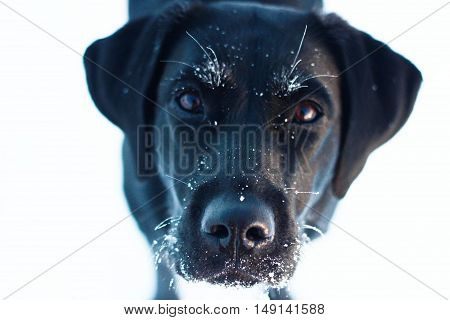 dog, winter, snow, cold, frost, snowflakes, nature, animal