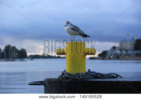Lonely seagull sitting on a yellow bollard in the early morning at the seaport of Helsinki, Finland