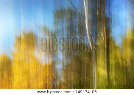 Natural forest background with panning motion. Abstract autumn landscape.