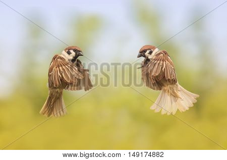 two birds flit looking at each other