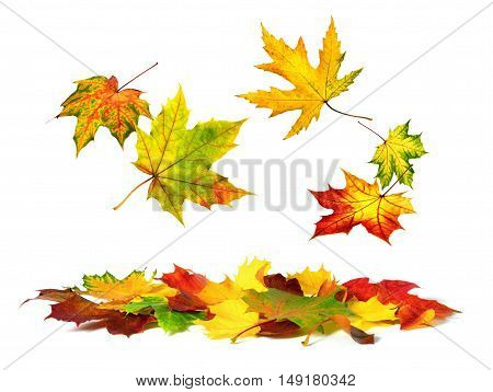 Isolated multi-colored autumn leaves gently falling down with white copy space