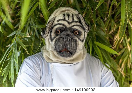 A chef wears a pug mask as Halloween costume.