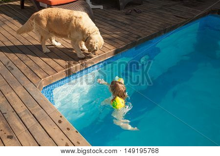 Dog Looking Child In Water Pool