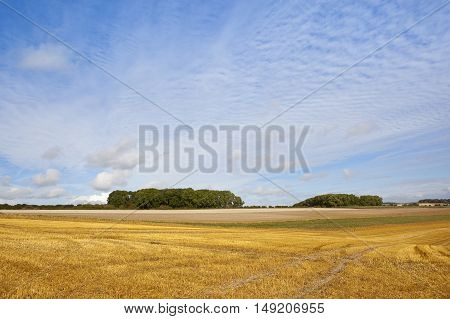 Copse And Stubble Field