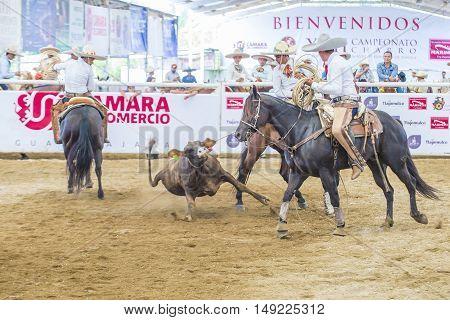 GUADALAJARA MEXICO - SEP 01 : Charros participate at the 23rd International Mariachi & Charros festival in Guadalajara Mexico on September 01 2016.