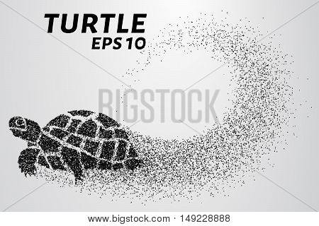 Turtle of the particles. Turtle consists of small circles.