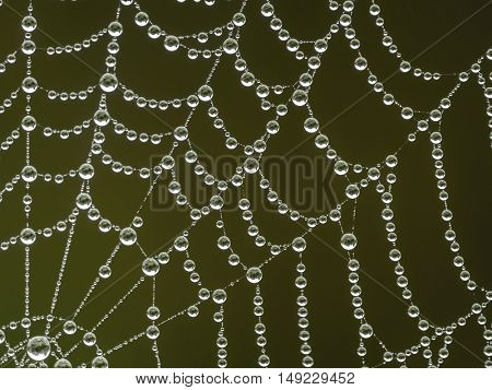 Spider web with morning dew droplets