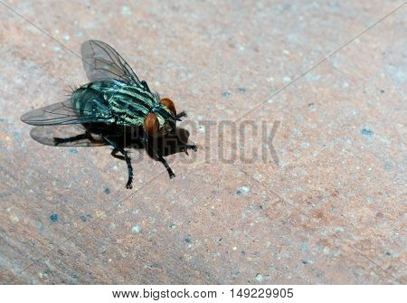 Fly, Close Up