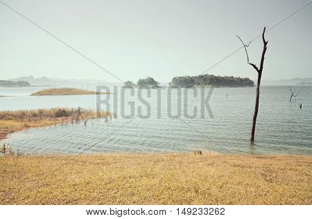 Pristine lake or sea with dry dead trees on vintage