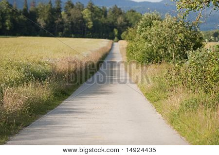 Road Between Fields