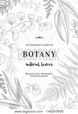 Floral vector background. Vintage invitation with various leaves. Botanical illustration. Fern seeded eucalyptus maidenhair. Engraving style. Design elements.