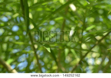 blur green plants in nature garden background