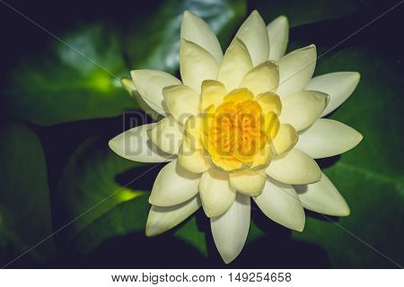 This beautiful lotus flower. Saturated colors and vibrant detail make this an almost surreal image. selective focus.