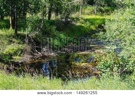 Rippling creek in the Canadian wood lands