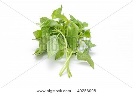 fresh green Hoary basil or lemon basil