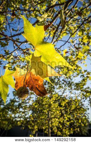 Park in fall season in Sant Cugat del Valles Barcelona Spain