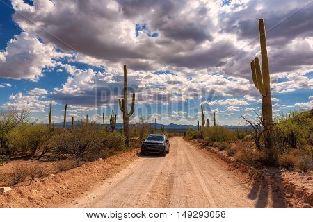 Trip to the Saguaro National Park, Arizona, USA
